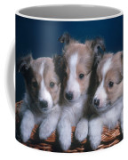 Sheltie Puppies Coffee Mug by Photo Researchers, Inc.