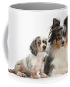 Shetland Sheepdog And Dachshund Puppy Coffee Mug