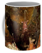 Shrimp With Legs And Claws Spread Wide Coffee Mug