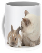 Siamese-cross Cat, Isaac, And Baby Coffee Mug