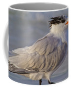Siesta Key Royal Tern Coffee Mug