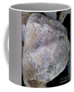 Signs Of The Ancient Seamstress Coffee Mug