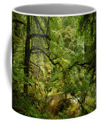 Silver Falls Rainforest Coffee Mug