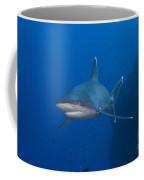 Silvertip Shark, Kimbe Bay, Papua New Coffee Mug
