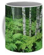 Silvery Birch Bark Gleams From A Bed Coffee Mug