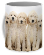 Six Labradoodle Pups Coffee Mug