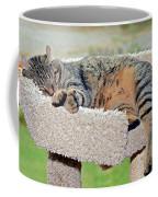 Sleeping Cat Coffee Mug