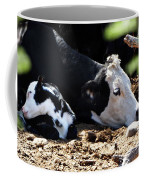 Sleepy Arizona Cows Coffee Mug