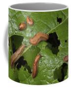 Slugs And A Snail Are Feeding On Leaves Coffee Mug