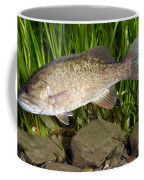 Smallmouth Bass Micropterus Dolomieu Coffee Mug