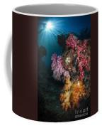 Soft Coral And Sunburst In Raja Ampat Coffee Mug