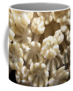 Soft Coral Polyps Feeding, Papua New Coffee Mug