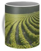 Soybean Crop Ready To Harvest Coffee Mug by Brian Gordon Green