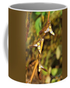 Soybean Yields After Seed Inoculation Coffee Mug by Science Source