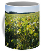 Soybeans Sprout In A Large Eastern Coffee Mug by Stephen St. John