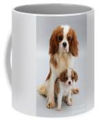 Spaniels Coffee Mug by Jane Burton