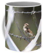 Sparrow - Protected By Razor Wire Coffee Mug
