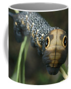 Sphinx Moth Caterpillar Inflating Coffee Mug by Darlyne A. Murawski