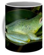 Spiny Glass Frog Coffee Mug