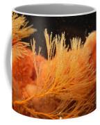 Spiral-tufted Bryozoan Coffee Mug