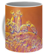 Spirochona Coffee Mug