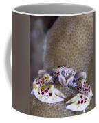 Spotted Porcelain Crab Feeding Coffee Mug by Steve Jones