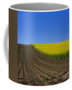 Sprouting Field Of Sunflowers And Field Of Rape. Auvergne. France. Europe Coffee Mug