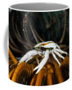 Squat Lobster Carrying Eggs, Indonesia Coffee Mug