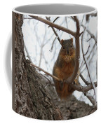 Squirrel Eating In The Frost Coffee Mug