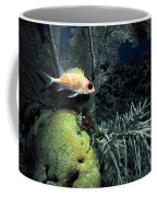 Squirrel Fish Coffee Mug
