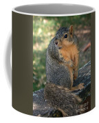 Squirrel Looking For A Hand Out Coffee Mug