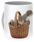 Squirrels In A Basket Coffee Mug by Mark Taylor