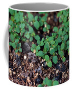 St. Johns Wort Coffee Mug