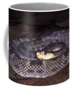 St. Lucia Pit Viper Coffee Mug