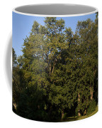 Stand Of Sugar Maple Trees Coffee Mug