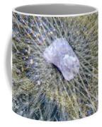 Star Hip 53550  Coffee Mug by Augusta Stylianou