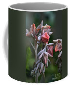 Star Succulents Coffee Mug