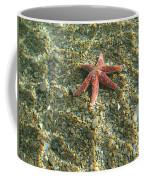 Starfish In Shallow Water Coffee Mug