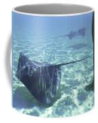 Sting Ray World Near The Nw Coast Coffee Mug