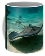 Stingray Approaching Coffee Mug
