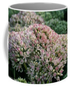 Stonecrop Coffee Mug