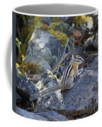 Straight Tailed Chipmunk On A Rock Coffee Mug
