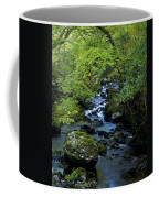 Stream Flowing Through A Forest Coffee Mug