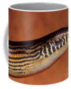 Striped Lateral Fold Lizard Coffee Mug