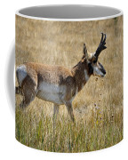 Summer Pronghorn Rain Coffee Mug