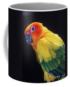 Sun Conure Coffee Mug
