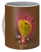 Sundew With Digested Food, British Coffee Mug