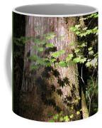 Sunlight Reaching The Forest Floor Coffee Mug