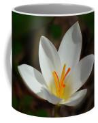 Sunlit Crocus Coffee Mug