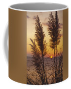 Sunset On The Mediterranean Sea And Plant Coffee Mug